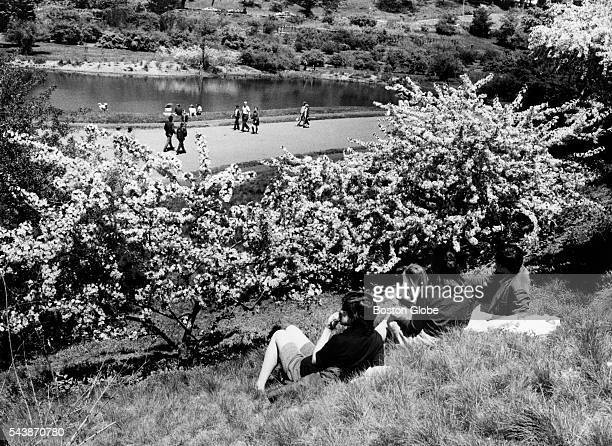 The Fleming family of Back Bay enjoys a picnic while flowering crabtrees bloom at the Arnold Arboretum in Boston on May 23 1971