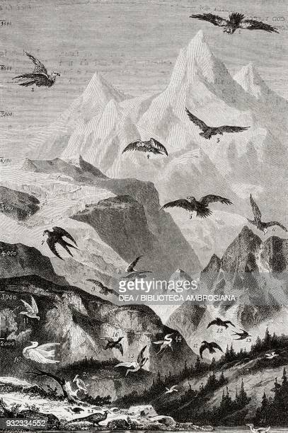 1 condor 2 bearded vulture 3 griffon vulture 4 sarcoramphus 5 eagle 6 black headed eagle 7 kite 8 falcon 9 sparrowhawk 10 hummingbird 11 dove 12...