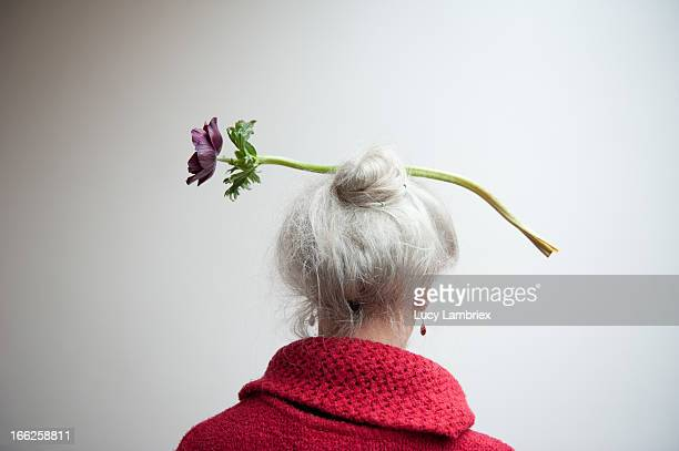 the florist - gray hair stock pictures, royalty-free photos & images