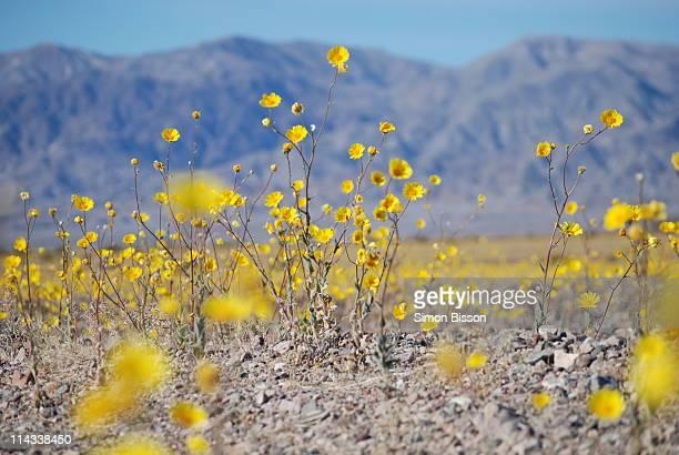 The Flowering Desert