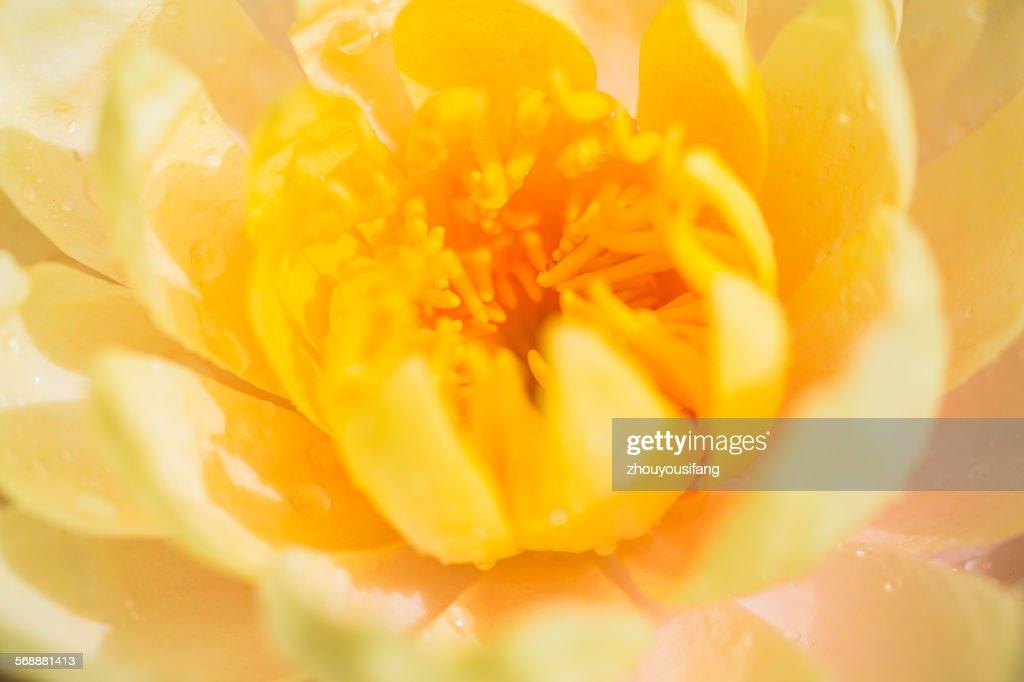 The flower's stamen and pistil : Stock Photo