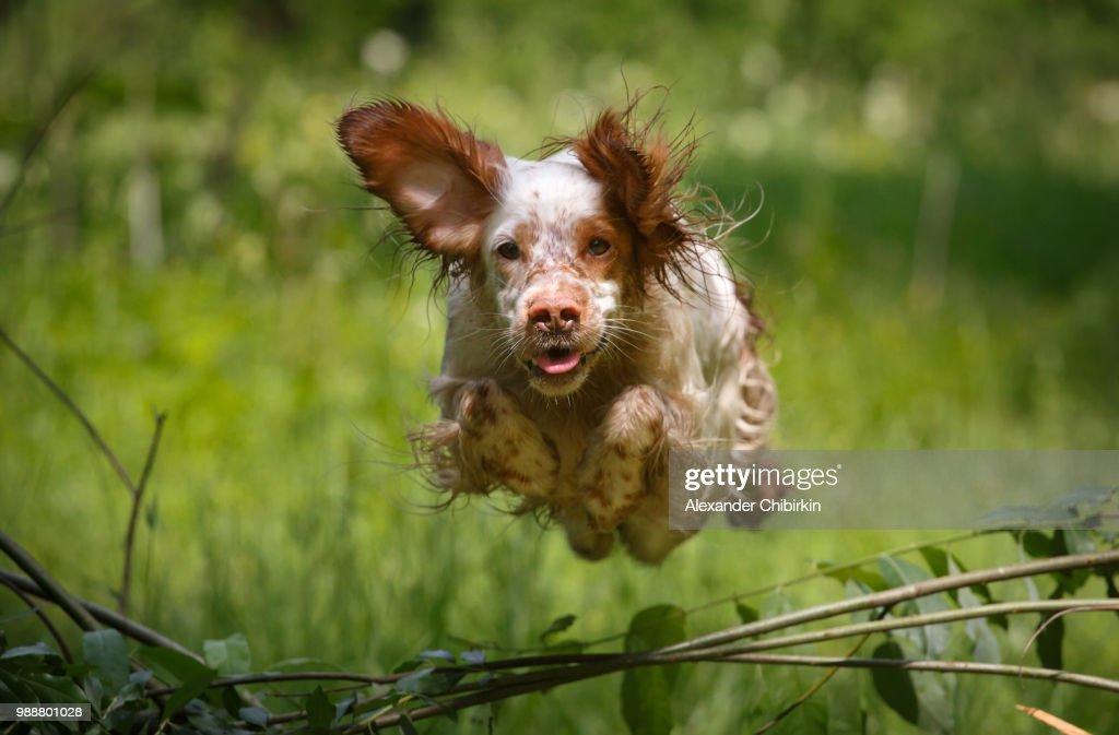 The flying dog : Foto de stock