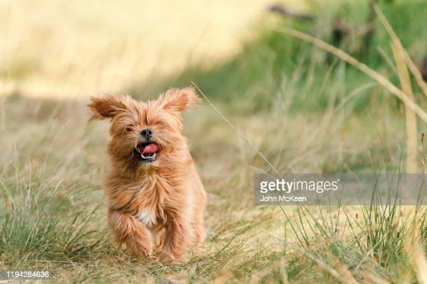 the flying furball - one animal stock pictures, royalty-free photos & images