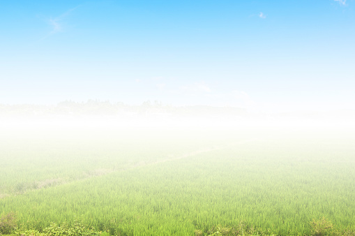 The fog effect of rice paddy field in blue sky. - gettyimageskorea