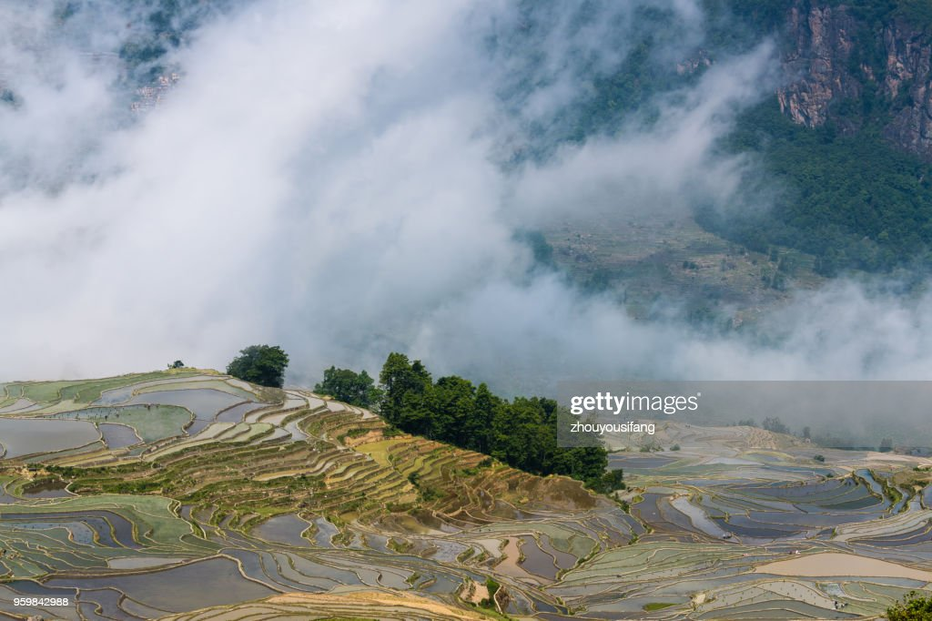 The fog sea and the terraced fields : Stock-Foto