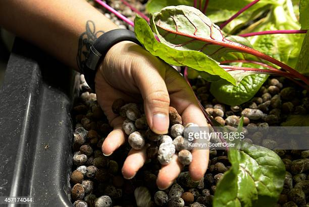 The food is not grown in soil but uses these round claytype beads and then grows hydroponically Sheriff deputies at the Denver County Jail at 10500 E...