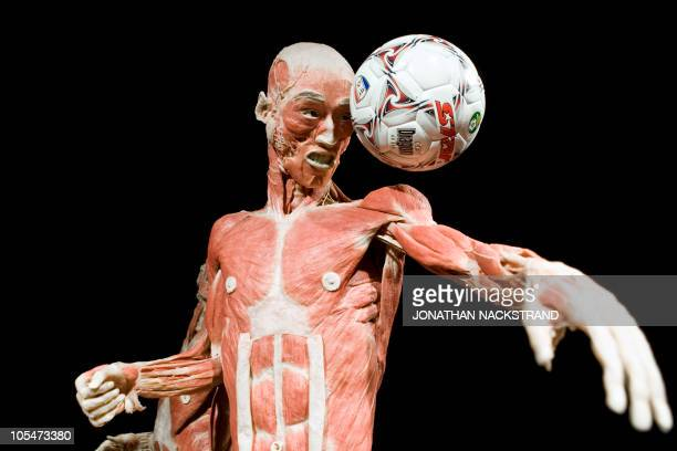 The football player is displayed at the opening of the exhibition Bodyworlds at the the Madatech science museum in the Israeli port city of Haifa on...