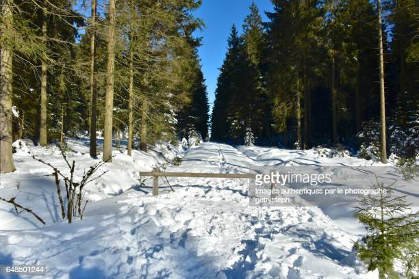 The footpath covered snow trough coniferous forest