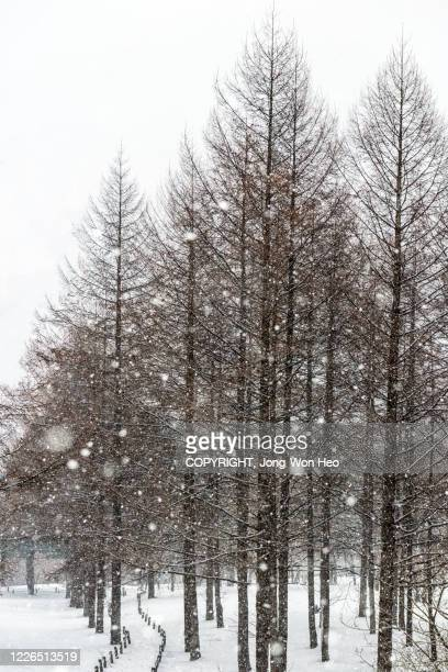 the footpath in the forest on a snowy day - gangwon province stock pictures, royalty-free photos & images