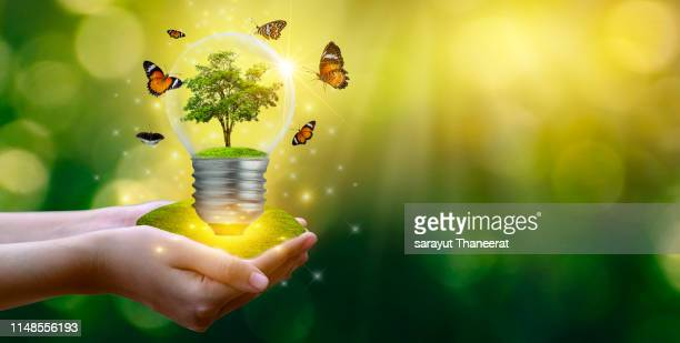 the forest and the trees are in the light. concepts of environmental conservation and global warming plant growing inside lamp bulb over dry soil in saving earth concept - earth day fotografías e imágenes de stock