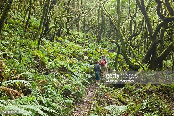 The forest of Garajonai National Park, La Gomera, Spain