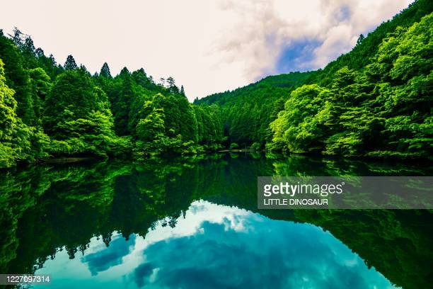 the forest on the water surface - 自然 ストックフォトと画像
