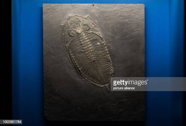 The fossil of an anthropod is displayed at the exhibition in Mainz Germany 16 May 2017 Marking the 70th birthday of the state of RhinelandPalatine...