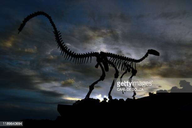 The fossilised skeleton of a dinosaur is seen at the headquarters of CAPPA a Brazilian research support centre for paleontology in Sao Joao do...