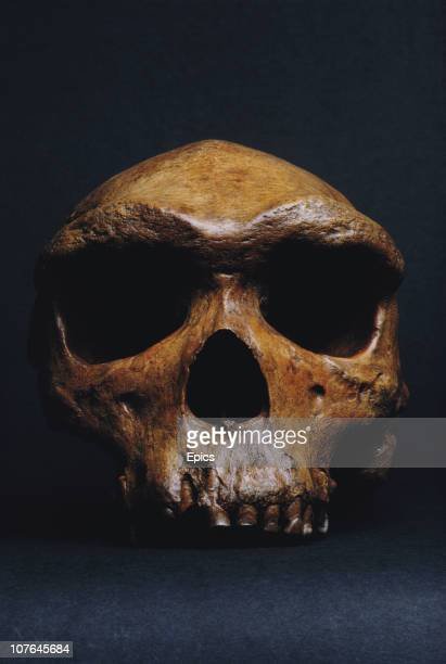 The fossilized skull known as Rhodesian man or Kabwe skull or Kabwe cranium or Broken Hill Man dated to be between 125000 and 300000 years old which...