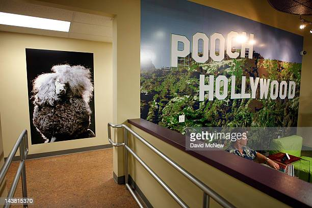 The fourth Pooch Hotel is seen at its grand opening on May 3 2012 in Hollywood California The Pooch Hotel is billed as a luxury hotel and daycare...