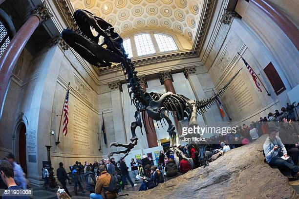 The foyer in the American Museum of Natural History.