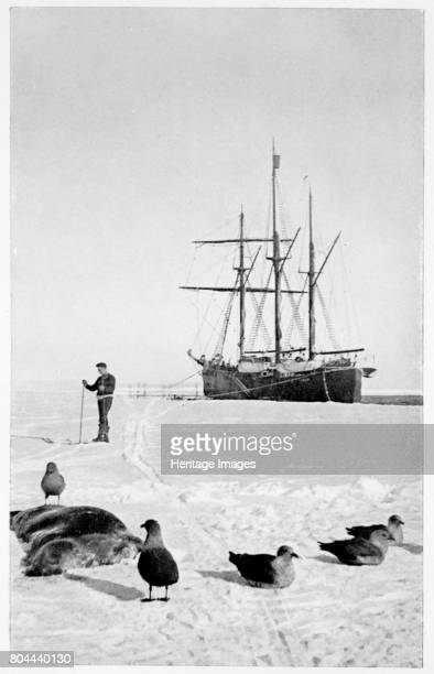 The 'Fram' in the Bay of Whales Antarctica 19111912 Norwegian polar explorer Roald Amundsen led the first expedition to reach the South Pole arriving...