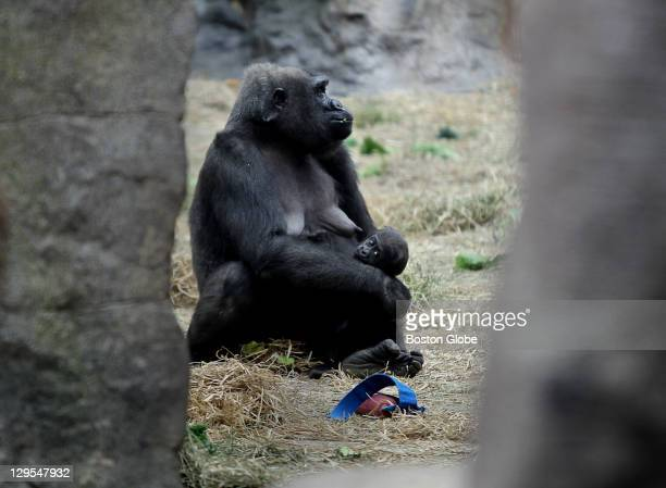 The Franklin Park Zoo hosted a special naming presentation for Kiki's new baby gorilla at the Tropical Forest More than 1700 names were submitted to...