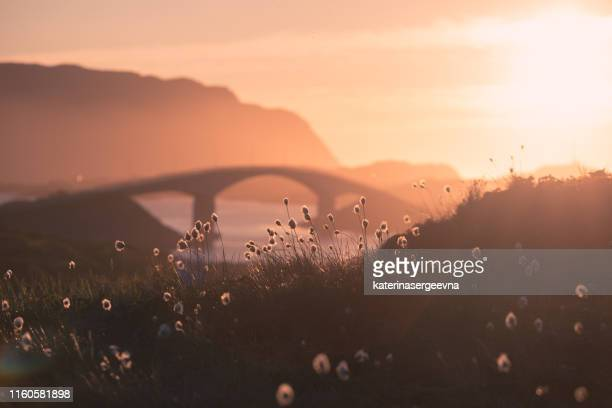 les ponts de fredvang sous le soleil couchant, lofoten, norvège, se concentrent sur la fleur - atlantic road norway photos et images de collection
