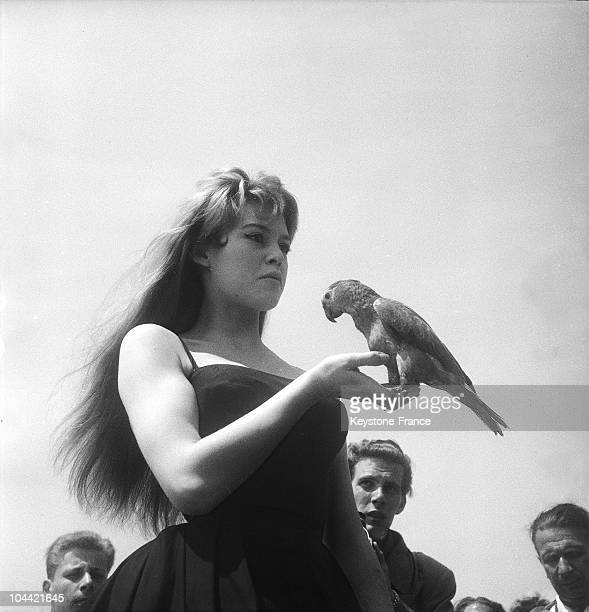 The French Actress Brigitte Bardot Posing With A Parakeet On The Beach Of Cannes During The International Film Festival On April 16 1956