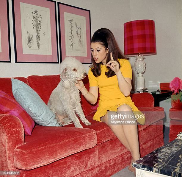 The French singer SHEILA speaking to her dog in her living room in April 1967