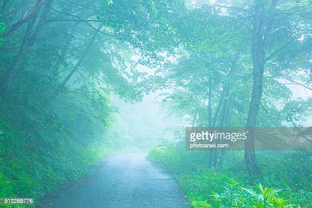 The fresh green of the forest and the road