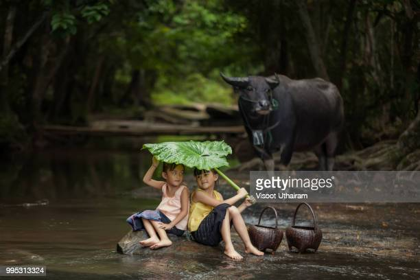The freshness of the children rural in the rainy season.