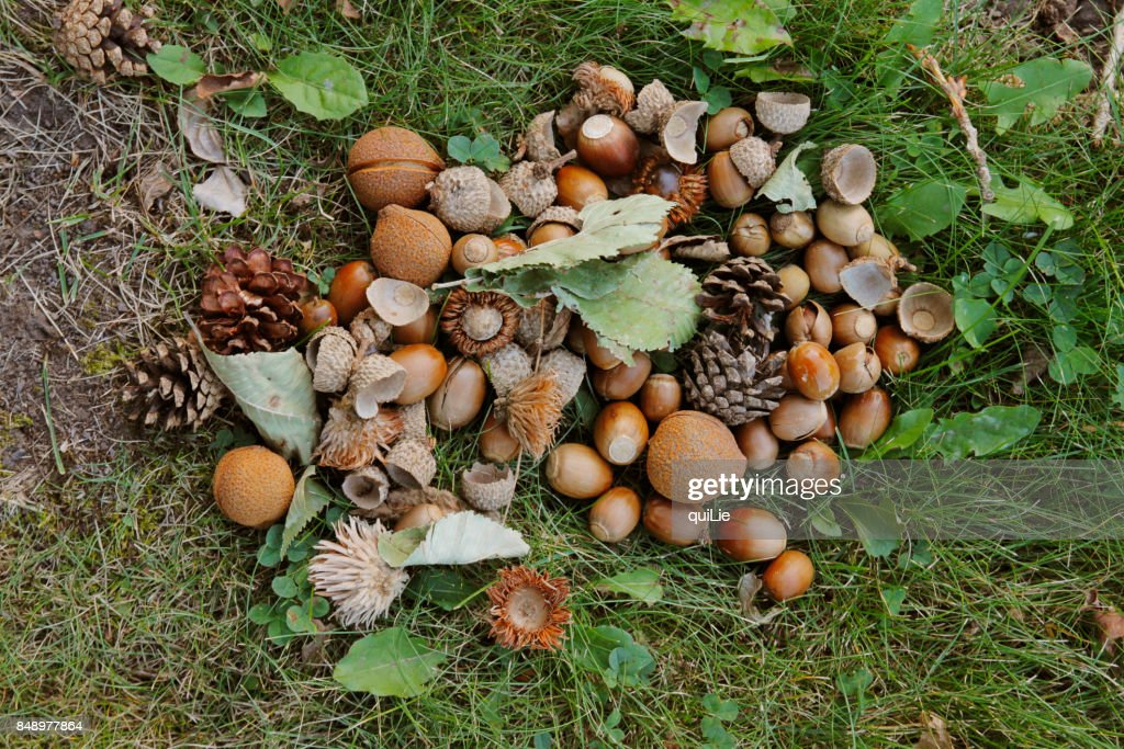 The fruit on the ground : ストックフォト