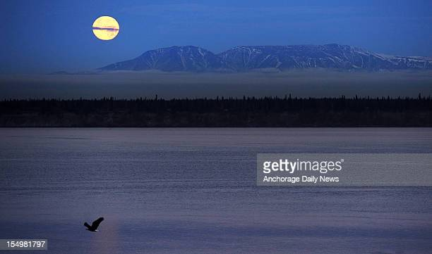 The full moon sets behind Sleeping Lady as an eagle inspects the Cook Inlet shoreline just before sunrise Monday October 29, 2012 in a view from the...