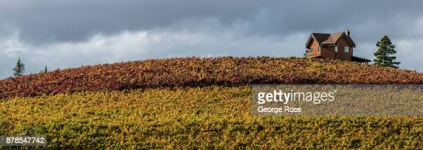 The full reds and golds of Autumn are viewed in the Russian River Valley on November 9 near Sebastopol California With the arrival of fall tourists...