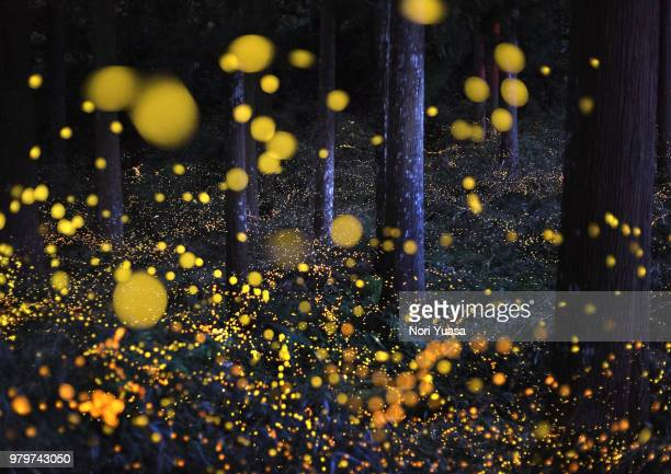 the galaxy in woods - fireflies stock pictures, royalty-free photos & images