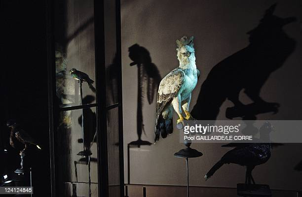 The gallery of the evolution in the garden of plants in Paris France in May1994 Harpy eagle