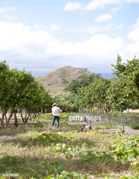 The Garden at Babylonstoren