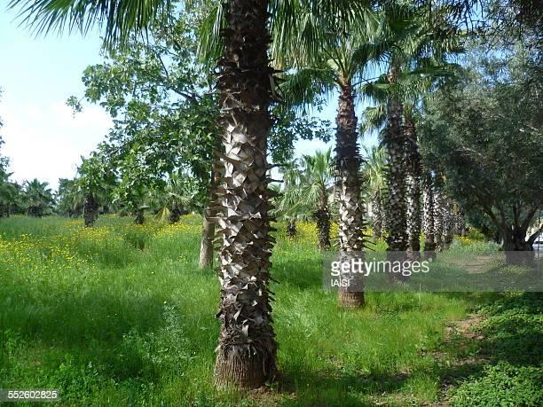 the garden of eden in spring, central israel - arboreto foto e immagini stock