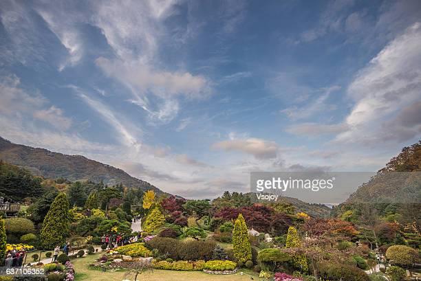 the garden of morning calm, gapyeong-gun, korea - vsojoy stock pictures, royalty-free photos & images