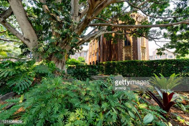 the garden of university of sydney wesley college, australia - university of sydney stock pictures, royalty-free photos & images