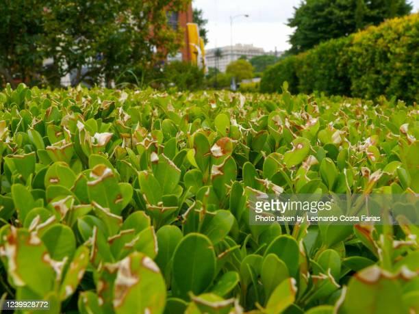 the garden - leonardo costa farias stock pictures, royalty-free photos & images