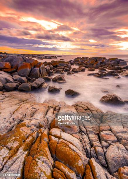the gardens, bay of fires, tasmania - good condition stock pictures, royalty-free photos & images