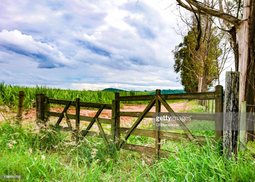 The gate is closed, guarding the farm's crops and beauties. : Stock Photo