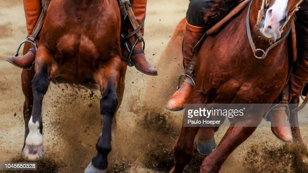 the gaucho - animal doméstico - fotografias e filmes do acervo