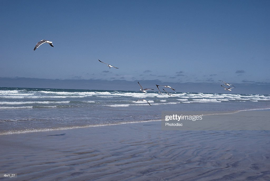 the gentle ocean washes onto a shore while seagulls fly above the waves under a clear sky : Foto de stock