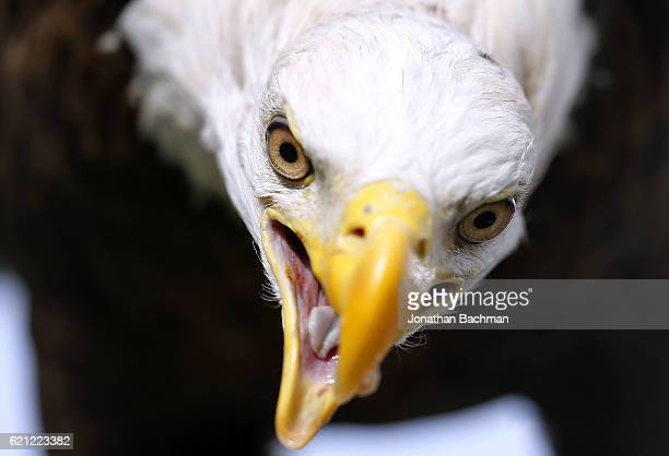 The Georgia Southern Eagles' mascot is seen before a game against the Mississippi Rebels at VaughtHemingway Stadium on November 5 2016 in Oxford...