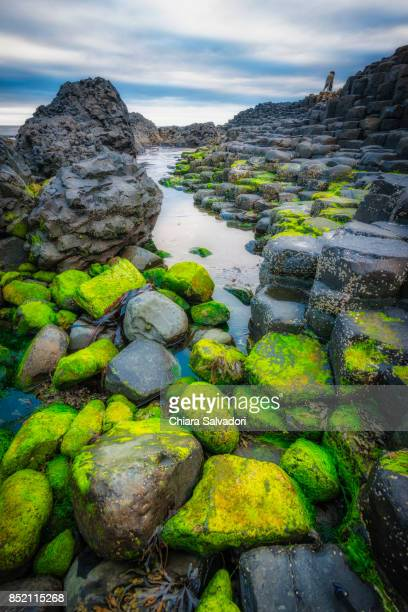the giant's causeway - county antrim stock pictures, royalty-free photos & images