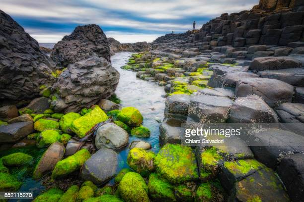 the giant's causeway - unesco stock pictures, royalty-free photos & images