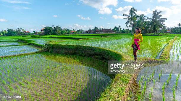 the girl standing on terraced field - reisterrasse stock-fotos und bilder
