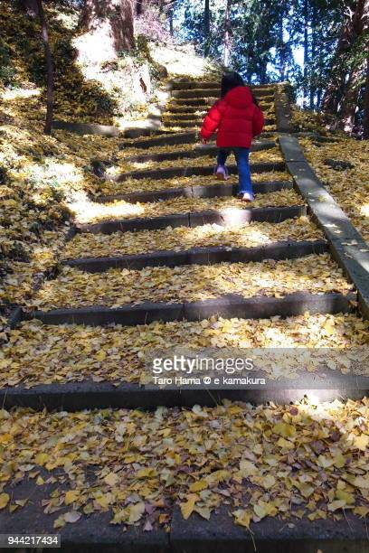 The girl walking on the ginkgo leaves-covered steps to top of mountain in Japan