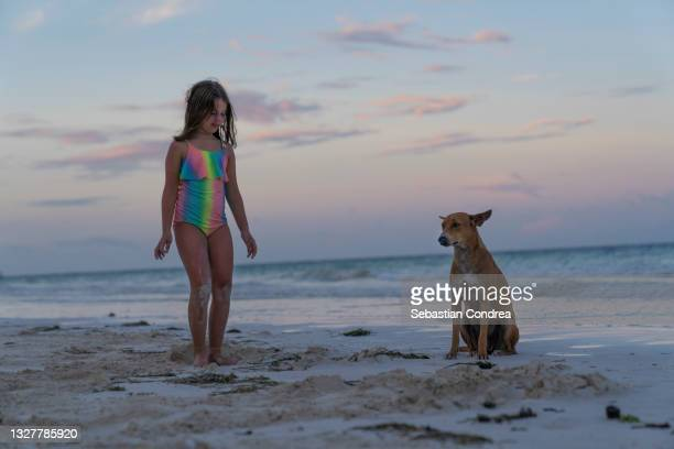 the girl with the dog seriously talking, at dusk on the beach. - mombasa stock pictures, royalty-free photos & images