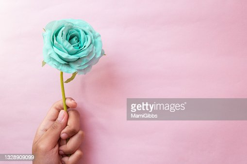 The Girls Hand Is Holding A Green Rose Flower High-Res ...