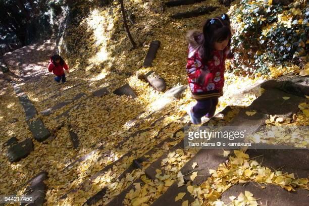 The girls walking on the ginkgo leaves-covered steps to top of mountain in Japan